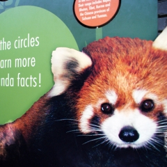 Red Panda Exhibit Signage