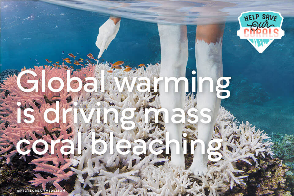 Cause marketing campaign on coral bleaching effects