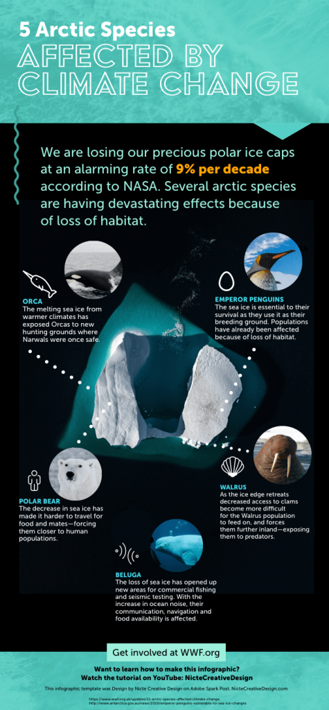 Adobe-Spark-climate-change-Infographic-example