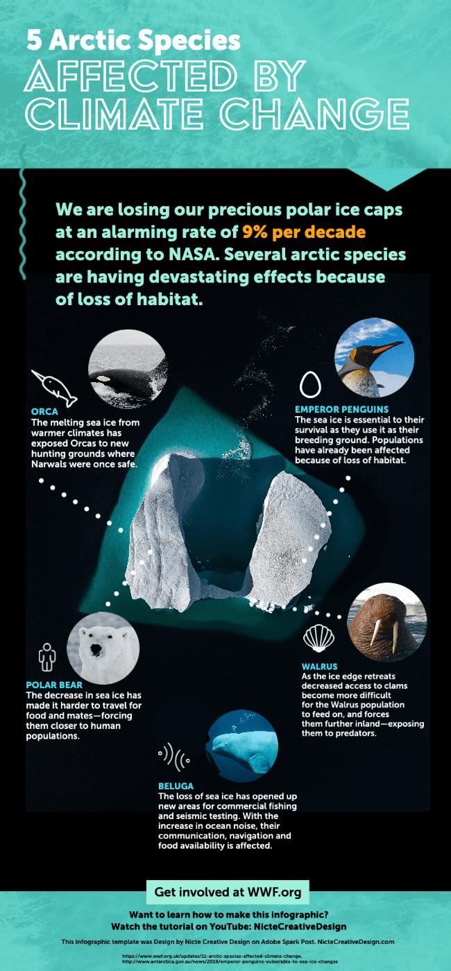 Adobe Spark Infographic on Arctic species